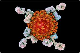 Coronavirus: Male plasma contains higher levels of antibodies