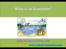 What is ecosystem?